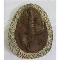 Large Trilobite Fossil