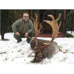 Fallow Deer hunt in Serbia  for 2 Hunters
