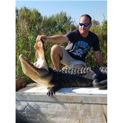 1 Day American Alligator  Hunt for 1 in Louisiana