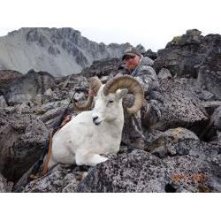 10 Day Alaskan Dall Sheep Hunt