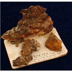 Willard Gold Specimen from the Gottschalk Collection