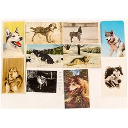 Dogsled Dogs Postcards with RPC (10)
