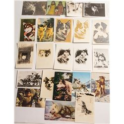 Dogsled Postcards: Large selection of sled dogs portraits
