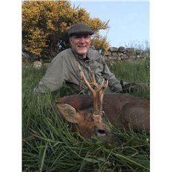 Scotland 2 Roe Deer Trophy Fees for 1 hunter for 4 nights/5days