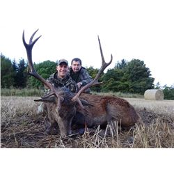 1 Red Hill Stag for 1 hunter in Scotland