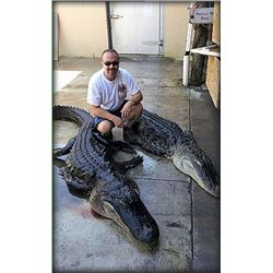 American Alligator Hunt from boat for 1