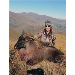 #WED-10 Tahr Hunt, New Zealand