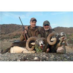 #FB-14 European Mouflon Hunt, Macedonia