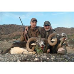 #FB-14 European Mouflon Hunt, Macedonia