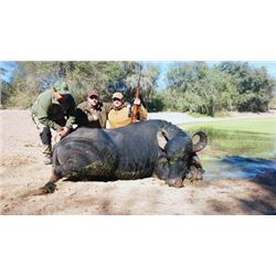#THD-03 Water Buffalo Hunt, Argentina