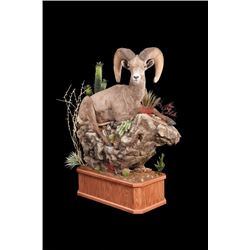 #THD-18 Life-Size North American Big Game Mount