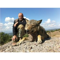 #FR-09 Wolf Hunt, Macedonia