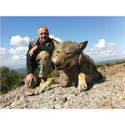 #FR-09 Wolf Hunt, Macedonia