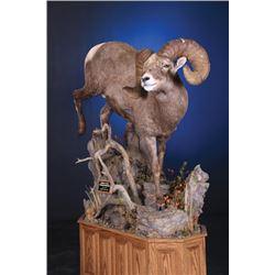 #SB-06 Life-Size Wild Sheep Mount