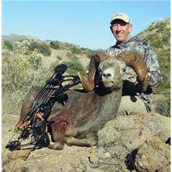 #SB-16 Desert Bighorn Sheep Hunt, Carmen Island, Mexico