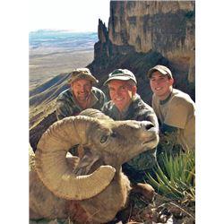 #SB-21 Nelsoni Desert Bighorn Hunt, Texas