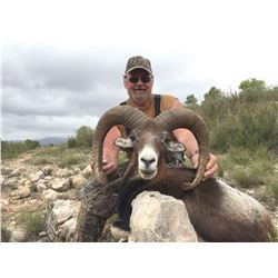 #SA-03 Iberian Mouflon Sheep Hunt, Spain