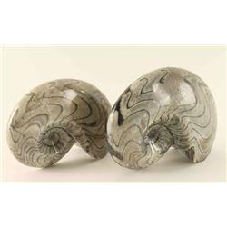 (2) Ammonite Fossils