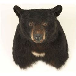 Bear Shoulder Mount