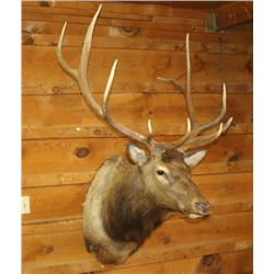 Large Elk Mount
