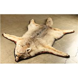Coyote Rug with Head