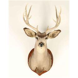 4x5 Buck Mount