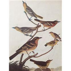 c1946 Audubon Print, #433 A Featured Pot-Pourri