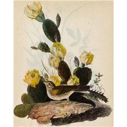 c1946 Audubon Print, Vesper Sparrow