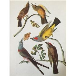 c1946 Audubon Print, #359 Three Tyrant Flycatchers