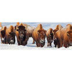Governor's Tag-Farewell Bison (DI351/352)