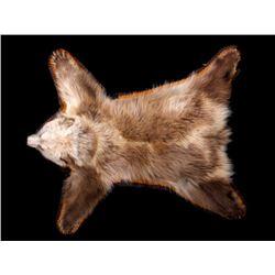 Montana Cinnamon Black Bear Cub Rug Mount