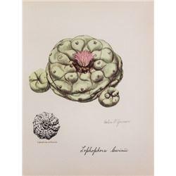 Hand Signed 1961 Litho Helen O'Gorman