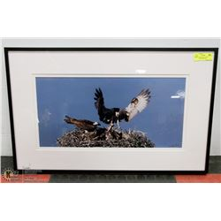 "30X19 ""HAWK FAMILY NEST"" PHOTOGRAPHY PRINT BY"
