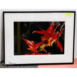 28X21 BLOOMING FLOWER PHOTOGRAPHY PRINT