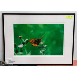 28X21 BUTTERFLY PHOTOGRAPHY PRINT BY MIKE