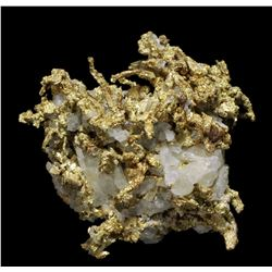 Wire Gold in Quartz from Ibex Mine, Leadville, Colorado