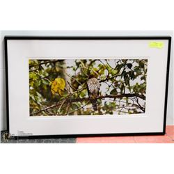 """30X19 """"COOPERS HAWK"""" FRAMEDE PHOTOGRAPHY PRINT"""