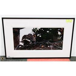30X19 EAGLE CLOSE UP FRAMED PHOTOGRAPHY PRINT