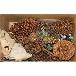 LARGE LOT OF LARGE PINE CONES, GREAT FOR