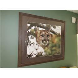 Cougar Print framed and matted 33 x 29 inches
