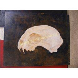 Bob Cat Skull Painting on Masonite
