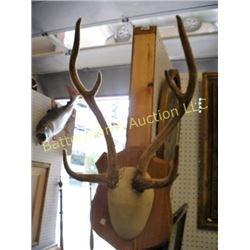 Small Horn Mount