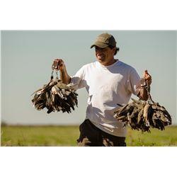 5-Star, 4-day Dove Hunt for 2 Hunters in Cordoba, Argentina
