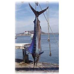 4 Days Fish Slamming Safari from Lad Shunneson & Ken Wilson Adventures for 1 Angler in Zihuatanejo,