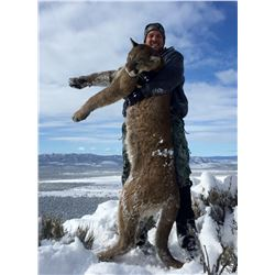 5 Day Hunt for a 1x1 Guided Trophy Mountain Lion Hunt in Utah