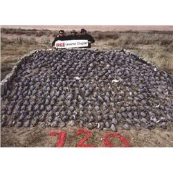 Two-Day Dove Hunt for 4 Hunters in Argentina