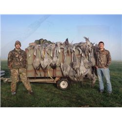 Three Day West Texas Sandhill Crane Hunt for Two Hunters
