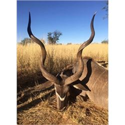 Seven Day South African Plains Game Hunt for Two or Three Hunters