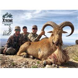 Three Day Texas Free Range Aoudad Hunt for One Hunter