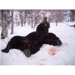 Kamchatka Brown Bear - $13,900 / Exhibitor